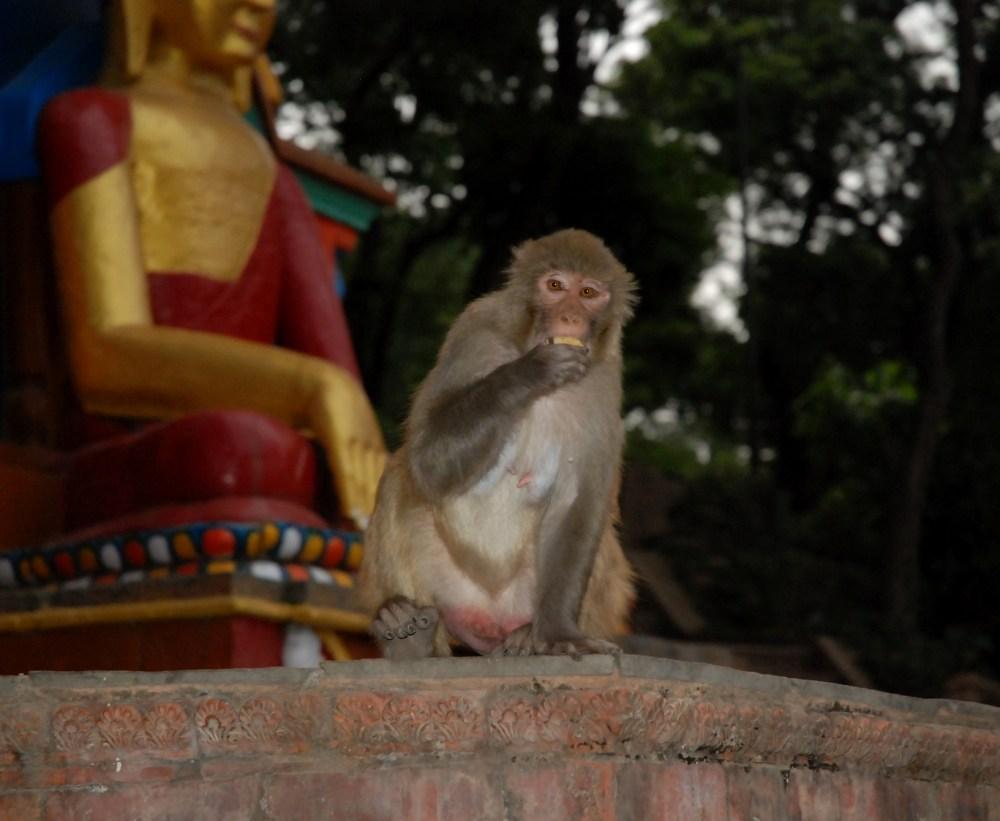 Nepal (1/6)