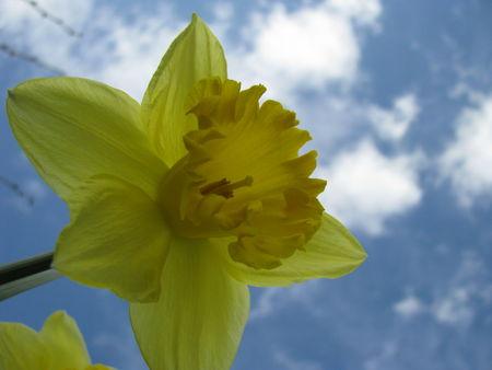309ae 51514303 p Les fleurs printanières du Gers