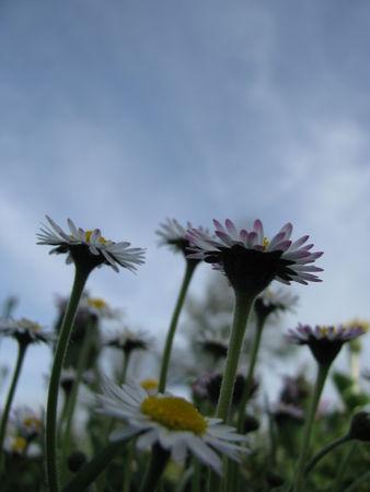309ae 51514545 p Les fleurs printanières du Gers
