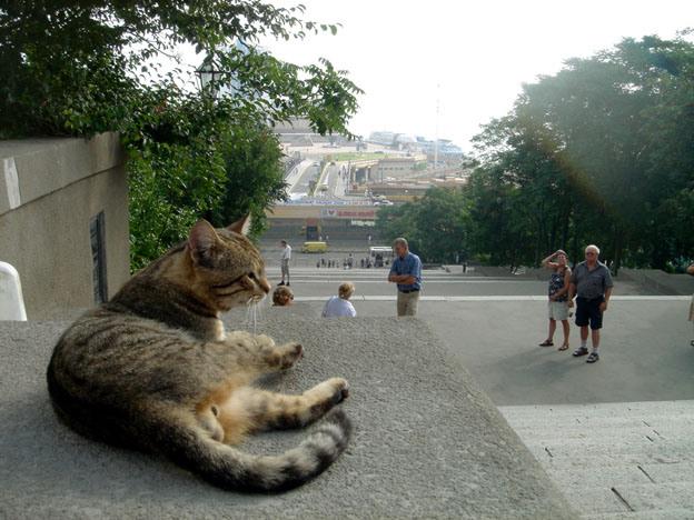 384a6a8b54 chat escalier potemkine odessa Odessa ; un lieu traditionnel de villégiature de lélite russe en Crimée (Tourisme Crimée)