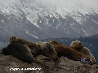 Ushuaia : Navigation par le canal de Beagle 4