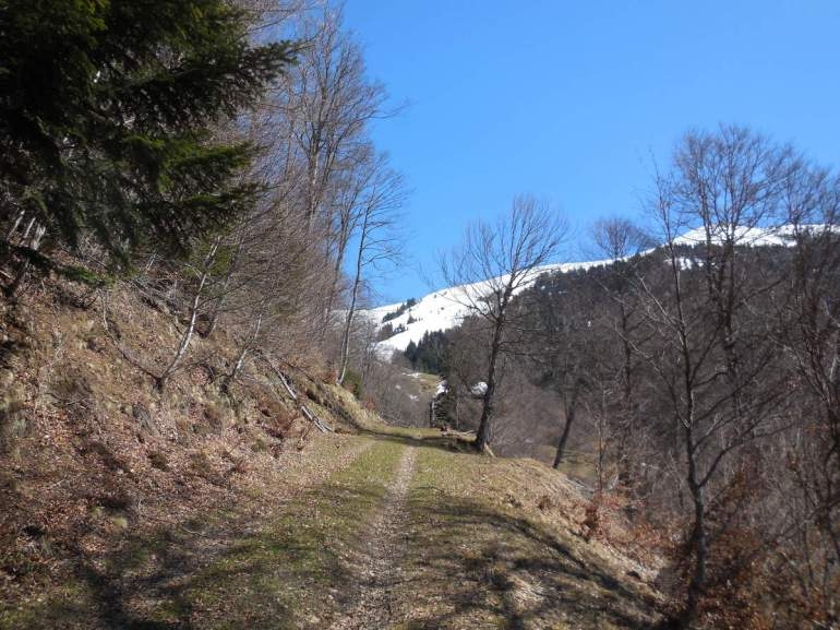 Nous redescendons par le sentier situé au milieu de Bois de le Rauère.