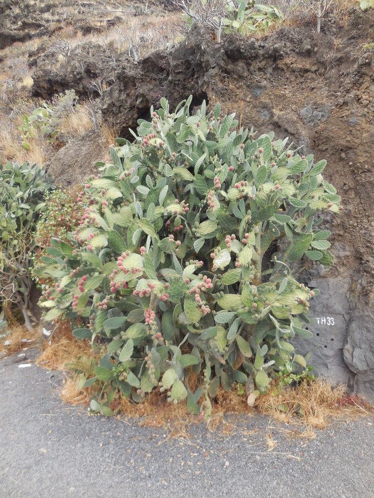 Une végétation qui varie suivant le relief...