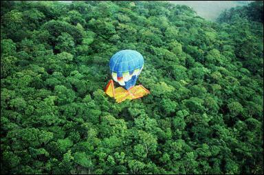 Voyage extraordinaire dans le monde invisible des forêts avec Francis Hallé 1