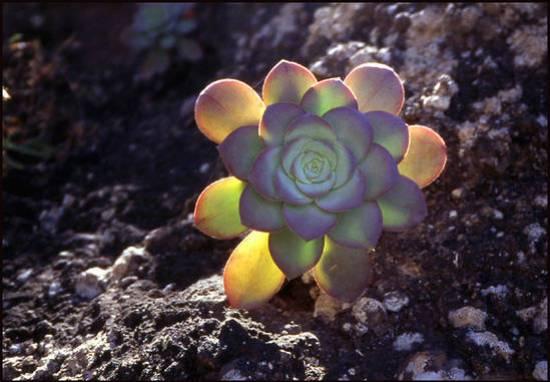 8dc77 cap vert plante grasse.1277113193 Voyage Cap Vert   Premiers pas sur les chemins du Cap Vert