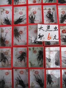 Marché de Shanghai : de Xizang à Dongtai Lu à la recherche de la petite bête 1