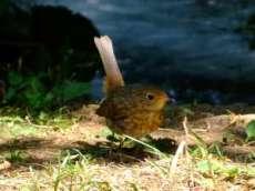 plitvice oiseau