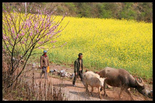 Voyage Chine - Shillin : Au-delà de la forêt de pierre, au-delà de l'orient… l'occident 5