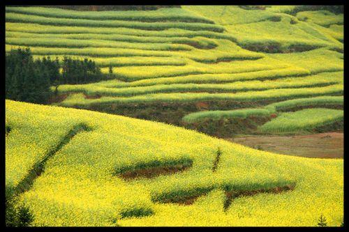 Voyage Chine - Shillin : Au-delà de la forêt de pierre, au-delà de l'orient… l'occident 2