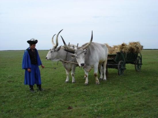 Parc national Hortobagy au coeur de la Puszta (Tourisme Hongrie Unesco) 1