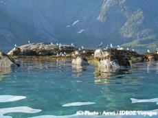 Nature en Norvège