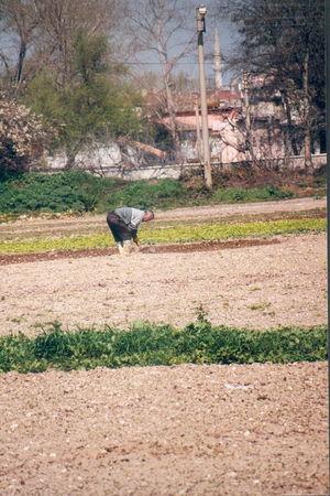 Lac de Kucukcekmece (Istanbul) : agriculteur