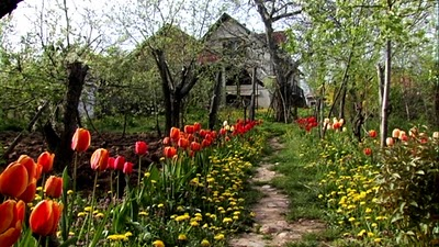 Serbie village jardin