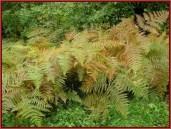 Retezat parc national roumanie vegetation
