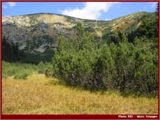 Retezat parc national sapins buissons