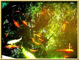 majorelle poissons