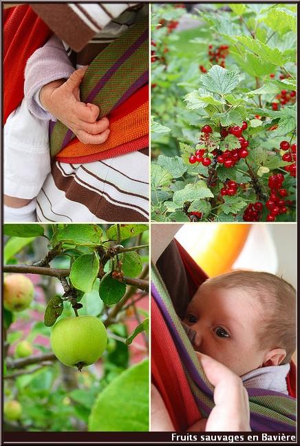 charlotte et fruits sauvages en baviere