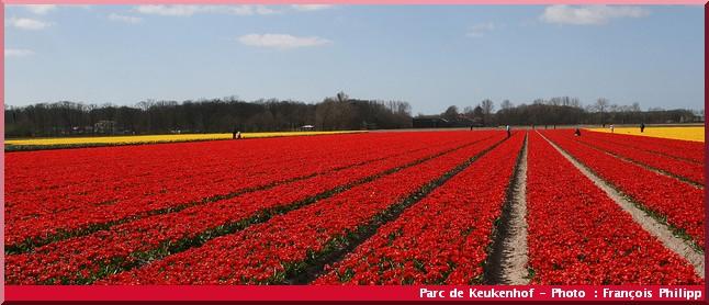 Keukenhof parc de fleurs pays bas