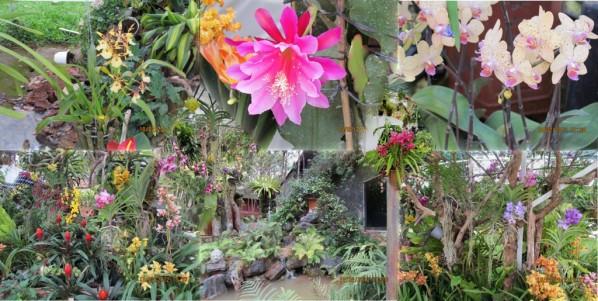 dalat orchidees