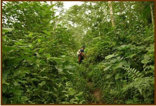 Bali forêt tropicale