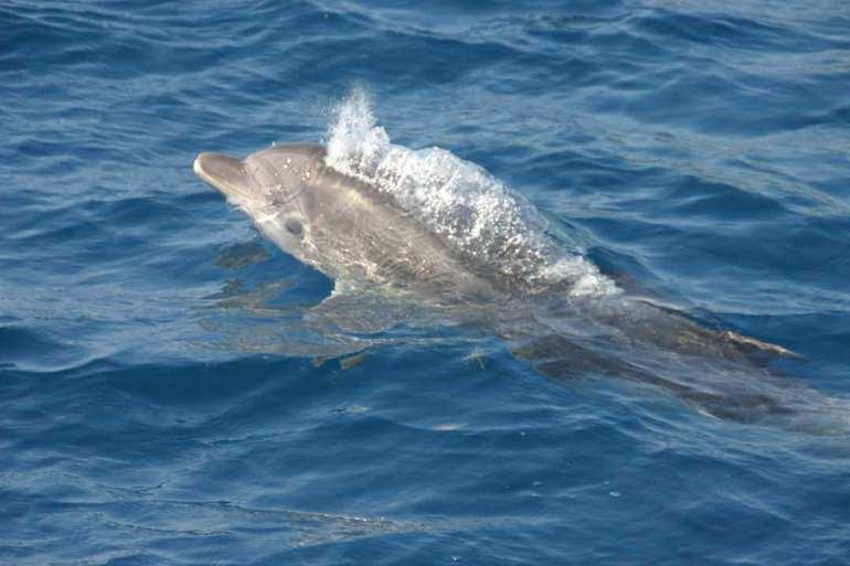 Découvrir les dauphins près de zadar et de l'île de Vrgada
