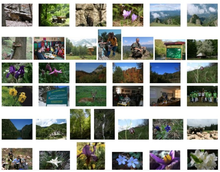 Parc national de Cozia en Roumanie