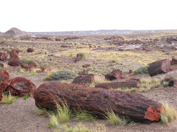 Petrified Forest National park Blue Mesa