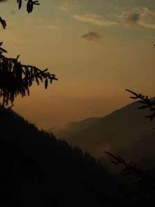 Rhodopes forêts de conifères