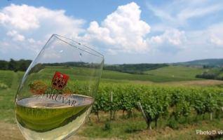 Daruvar route des vins croates