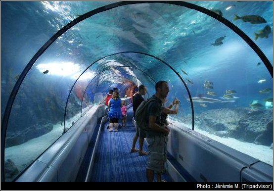 tunnel requins marineland antibes