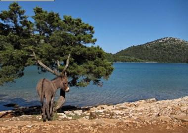 ane parc naturel Telascica