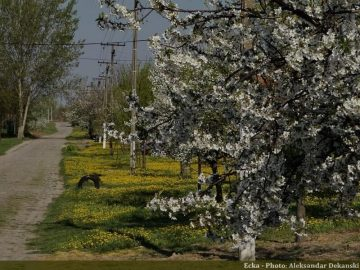 Route de campagne à Ecka en Serbie
