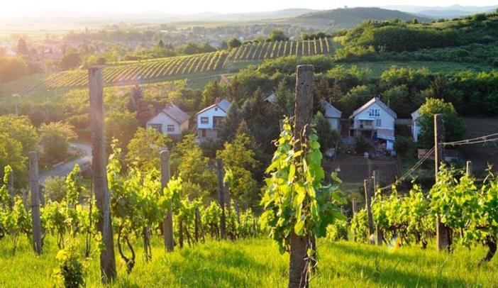 région de Tokaj