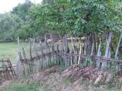 Arilje moutons (1)