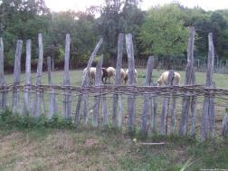 Arilje moutons paissant dans le pré (1)