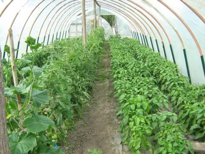 Tomates sous les serres seoksi turizam Lackovic