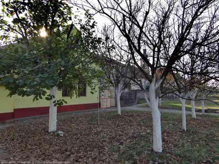arbres dans la rue de Krcedin en Voïvodine