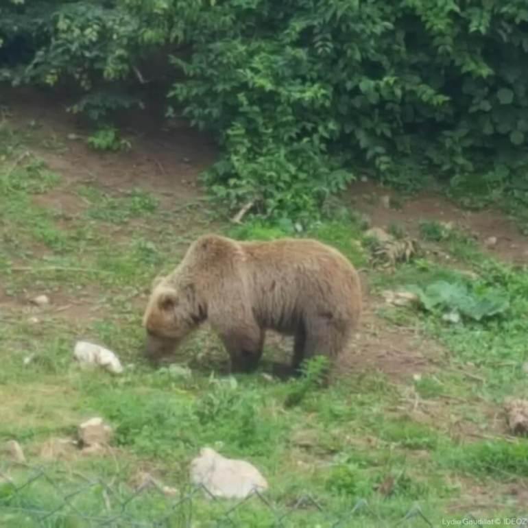 Refuge des ours de Kuterevo : rencontre avec les ours bruns de Croatie 16