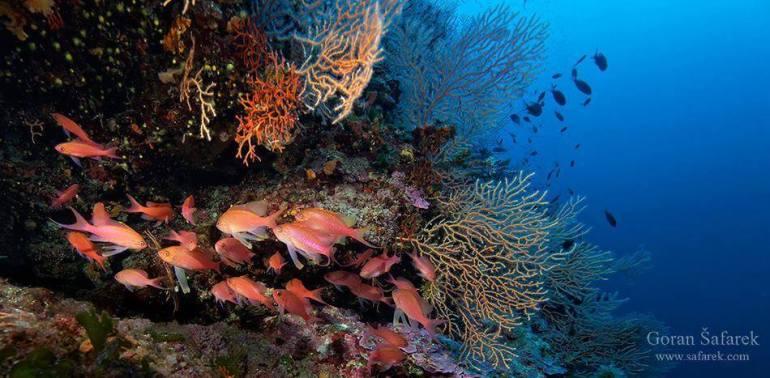 Où faire de la plongée en Croatie? Top 5 des meilleurs sites de plongée 5