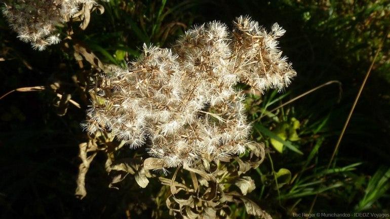 fleurs d'automne sur le sentier entre le lac ammer et andechs