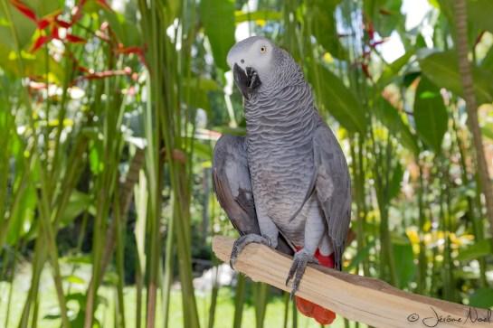 Bali Bird Park - Perroquet 3