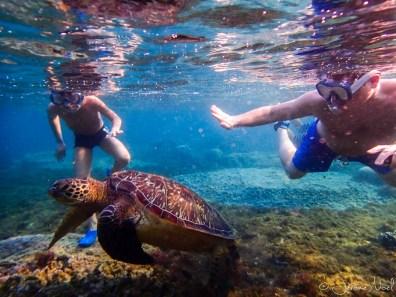 Apo Island - tortue Luka et Jérôme
