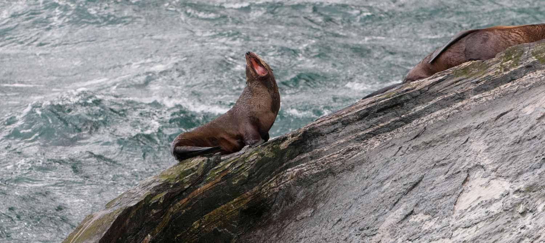 Milford Sound, Ile du Sud, Nouvelle-Zélande