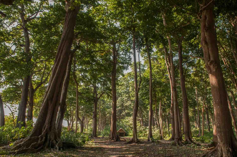 Inde : Les îles Andaman