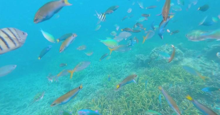 Malaisie : snorkeling à Coral Island, sur l'île de Tioman