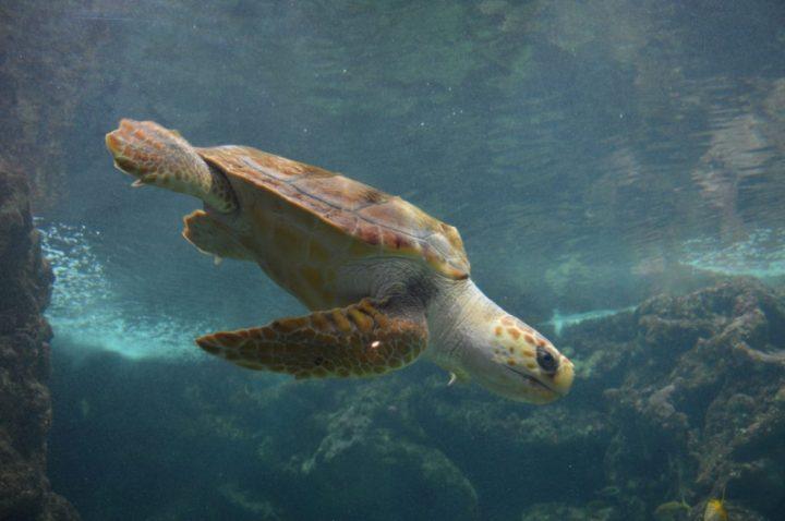 oceanopolis-tortue-pavillon-tropical