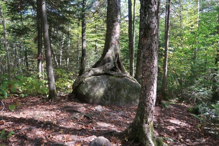 parc mont tremblant randonnée de la roche