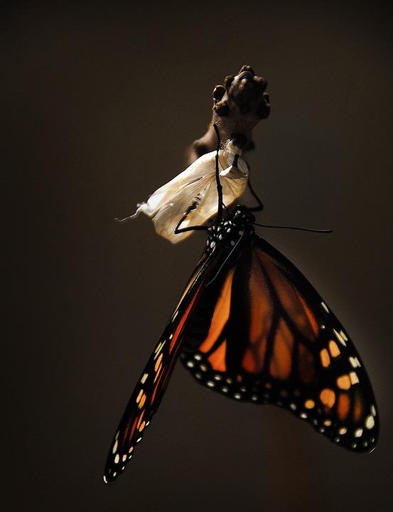 revivre nouvelle vie papillon