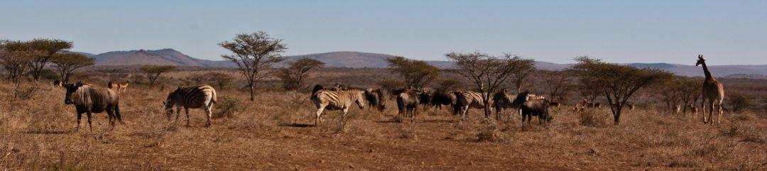 Savane africaine volontariat international