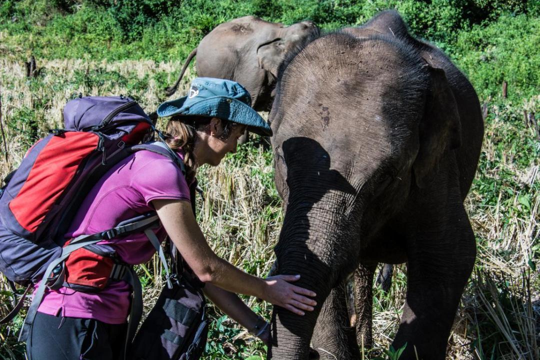nourrir les éléphants d'Asie